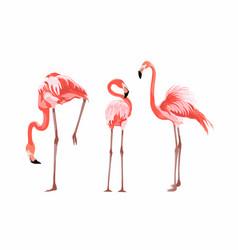 Exotic pink flamingo birds set vector
