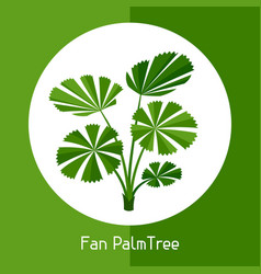 Fan palm tree of exotic tropical vector