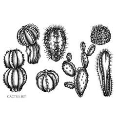 set hand drawn black and white cactus vector image