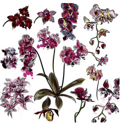 set of detailed orchid flowers vector image