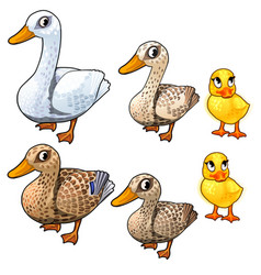 maturation stages of duck three stages of growth vector image