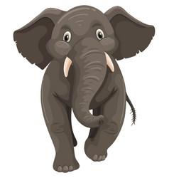 Baby elephant on white background vector
