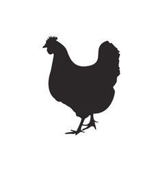 Chicken silhouette vector