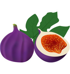 whole fig with slice solated on white background vector image