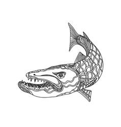 barracuda fish doodle art vector image