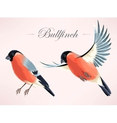 bullfinch vector image