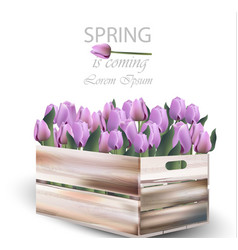 Tulip flowers box spring vector