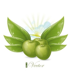 green apples and leaves against the sunshine vector image vector image