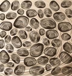 Shells background vector