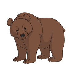 color image a brown bear isolated object vector image