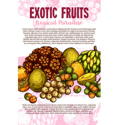 exotic tropical fresh fruits sketch poster vector image