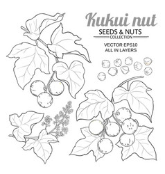 Kukui branches set on white background vector
