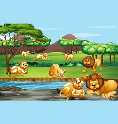 Scene with many lions in field vector