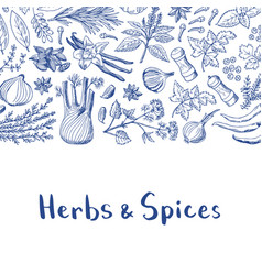 hand drawn herbs and spices background with vector image