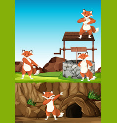 wild foxes group in many poses in animal park vector image