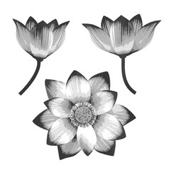 A set realistic lotus flowers vector