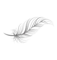 Clip art feather vector
