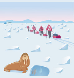 Expedition in the arctic with walrus in the vector