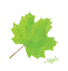 green maple leaf in low poly style vector image