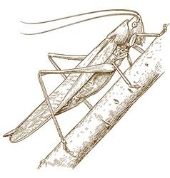 engraving grasshopper vector image