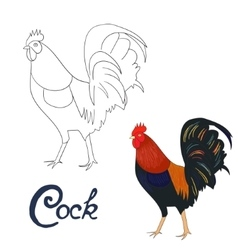 Educational game coloring book rooster bird vector