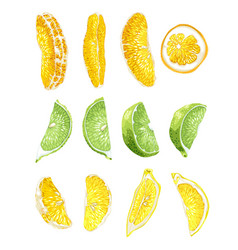 Fruit set with lime orange and lemon slices vector