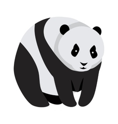 Giant Panda Bear Isolated on White vector