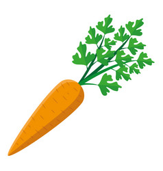 orange carrot icon vector image