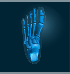 simple x-ray picture of foot in blue colors vector image