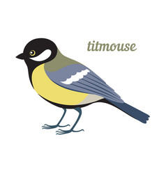 titmouse vector image