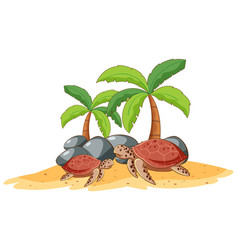 two sea turtles on white background vector image