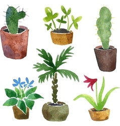 Watercolor drawing home plants vector