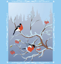 winter postcard with bullfinches vector image