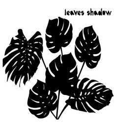 black silhouette monstera palm tropical leaves vector image