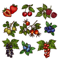 Fresh garden and wild berry fruits vector