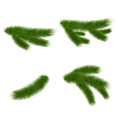 Set of fir branches on white background vector