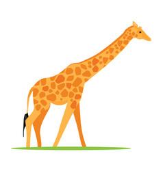 african animal giraffe vector image
