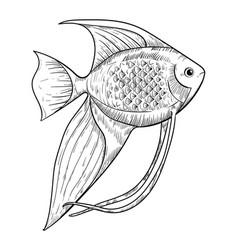 Aquarium angelfish sketch isolated on white vector