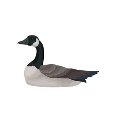 Beautiful goose with long black neck white cheek vector