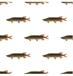 seamless pattern freshwater flat pike fish vector image