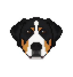 swiss mountain dog head in pixel art style dog vector image vector image