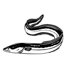 European eel fish black and white vector
