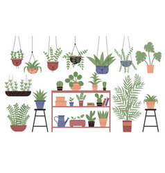 Great amount variety houseplants in pots flat vector
