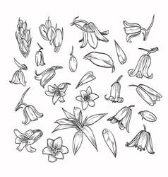 Hand drawn elegant bluebells vector