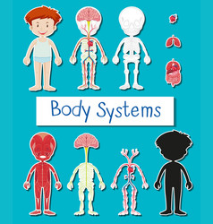 little boy and body system poster vector image