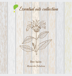 pure essential oil collection bee balm wooden vector image