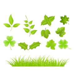 various green plants vector image