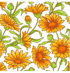 Calendula flower pattern vector
