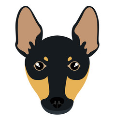 miniature pinscher avatar vector image