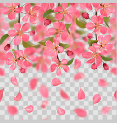 pink blossoming cherry and falling petals with vector image